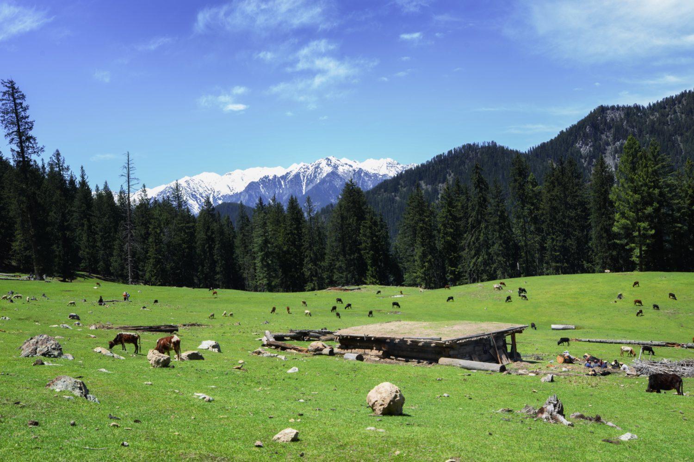 Meadow on the way to Jahaz Banda Kumrat valley