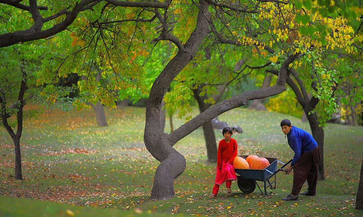 Royal Garden Hunza Gilgit Baltistan